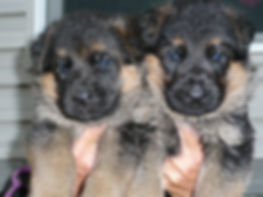 carol lex puppy headshots.JPG