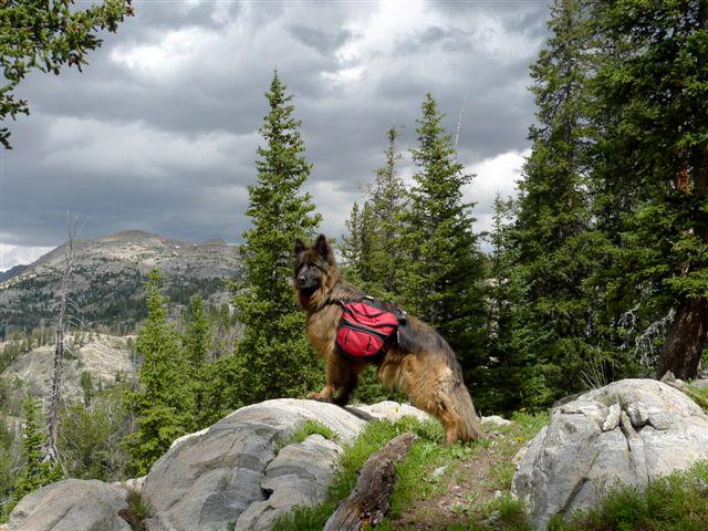 roziers dog Zadi in the winds.jpg