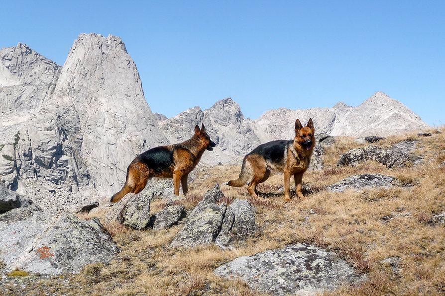 Del_Cono_Sur_dogs_in_mtns.JPG