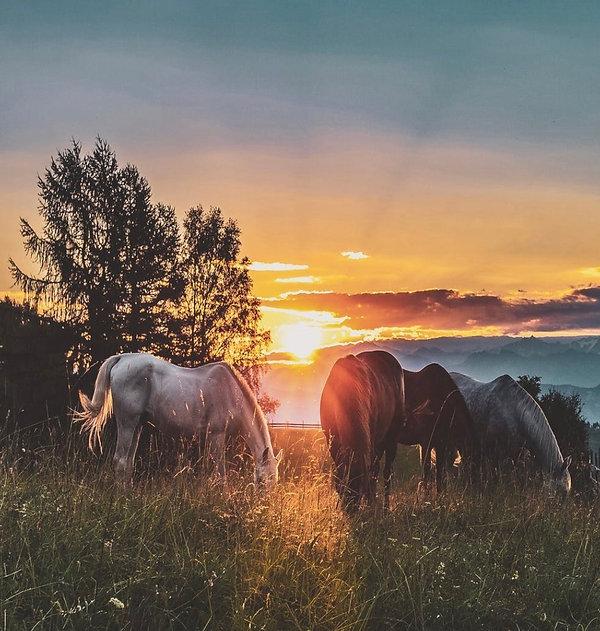 half_moon_lake_horses in sunset.jpeg