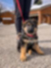 Lilly&Votan_typical_Male_puppy.jpg