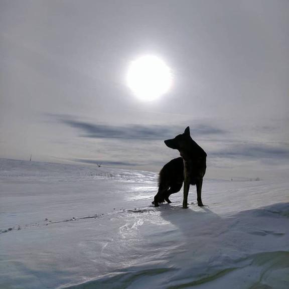 Dog in moonlight.jpg