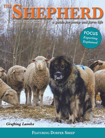 The Shepherd Magazine