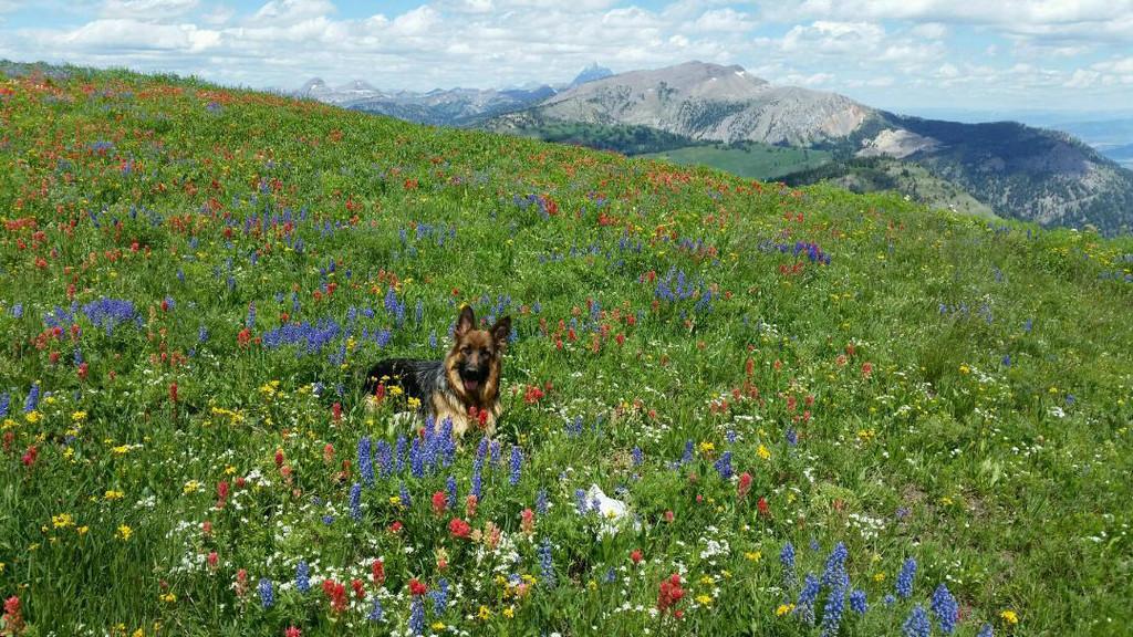 Zoey in wildflowers.jpg