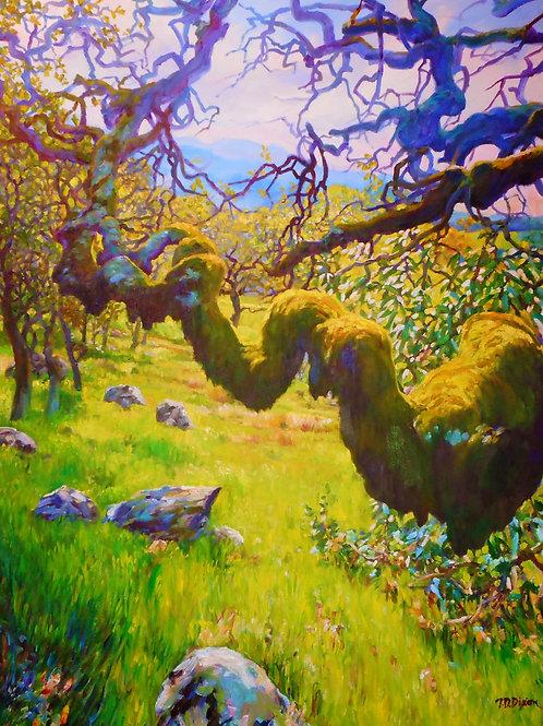 ' Ancestor Oak '