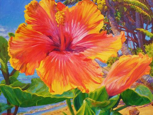 ' Coconut Hibiscus '