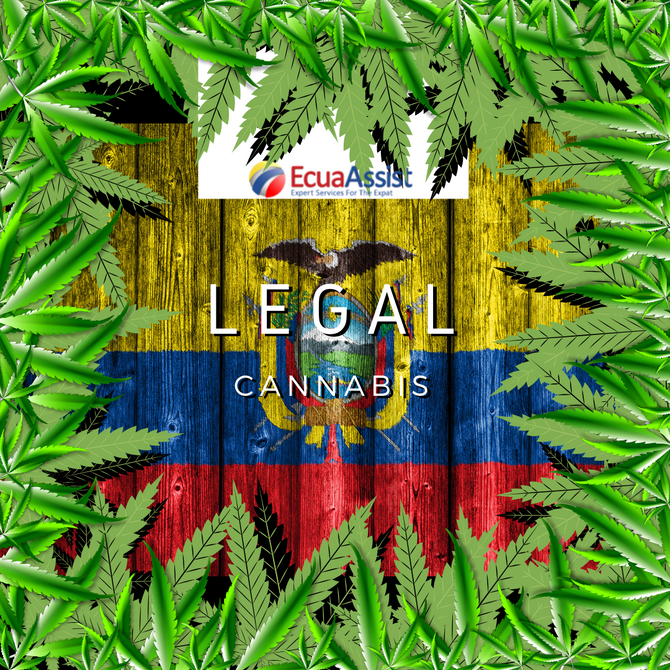 IN ECUADOR IS LEGAL TO GROW CANNABIS*