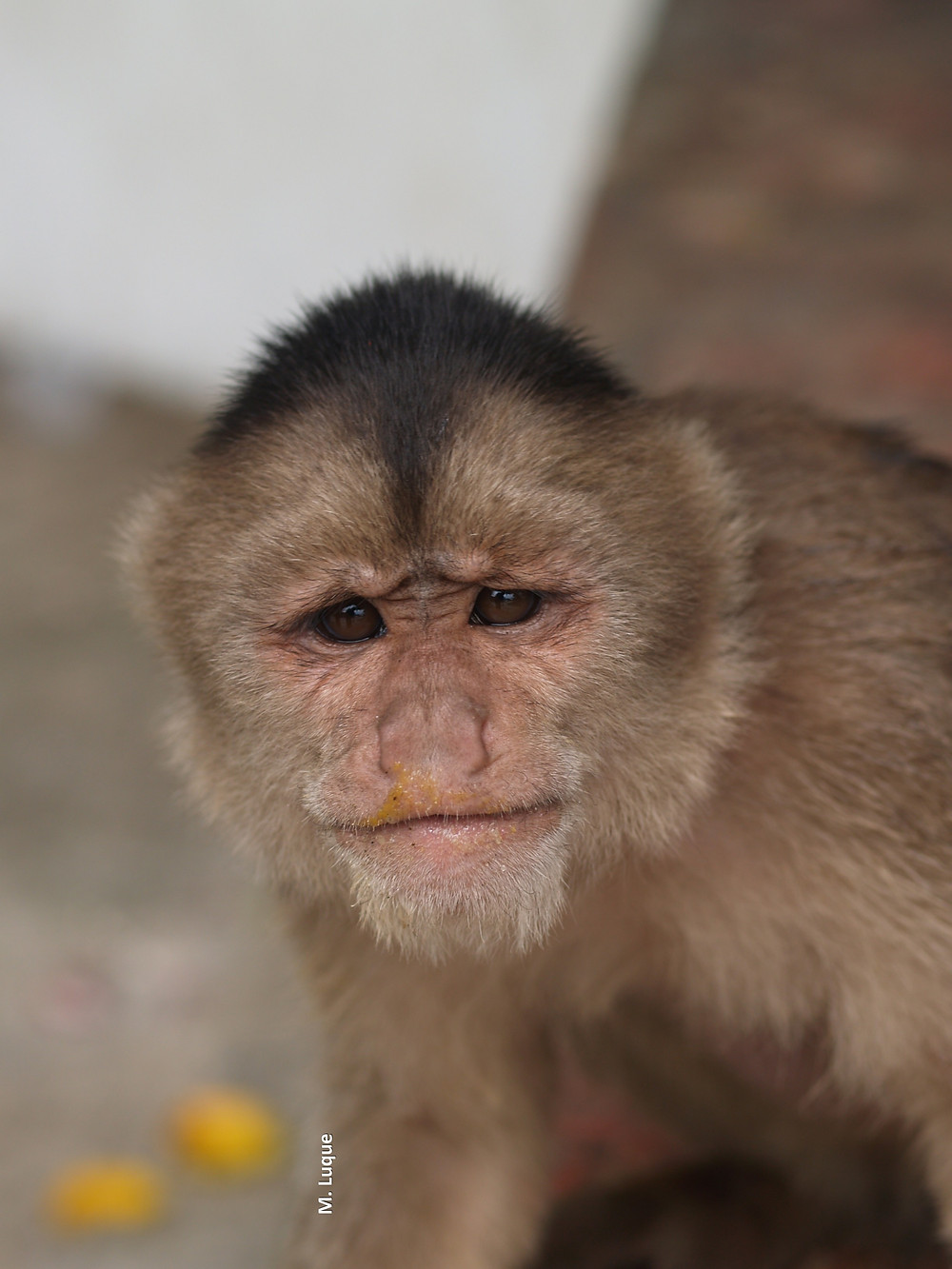 monkey tours.jpg