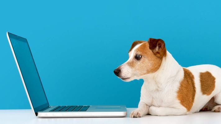 "<img src=""dog.jpg"" alt=""Dog looking at laptop"">"