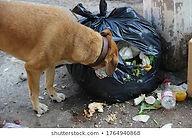 """<img src=""""dog eating.jpg"""" alt=""""dog eating mouldy food from a bin"""">"""