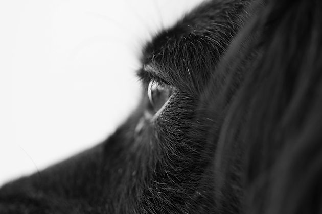 "<img src=""dog first aid.jpg"" alt=""Close up of dogs eye"">"