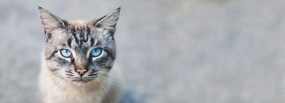 "<img src=""cat.jpg"" alt=""cat first aid course online"">"