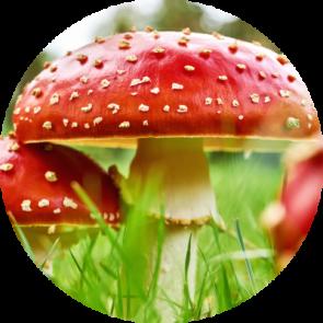"<img src=""mushroom.jpg"" alt=""fly agaric mushroom"">"