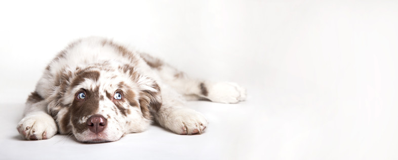 "<img src=""dog first aid.jpg"" alt=""Animal Love dog first aid online course"">"
