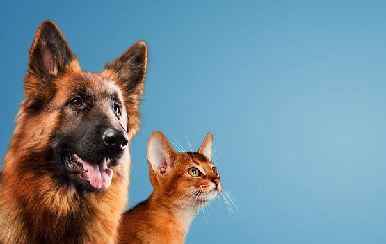 "<img src=""dog first aid.jpg"" alt=""Animal Love dog first aid classroom course"">"
