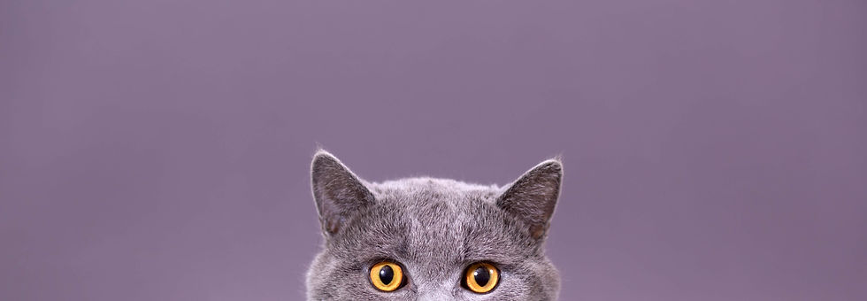 """<img src=""""cat.jpg"""" alt=""""Close up of cats face and ears"""">"""