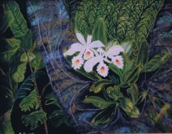 Orchidée d'Hawaï