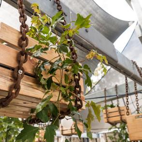 bassendean-garden-install-photos-27.jpg
