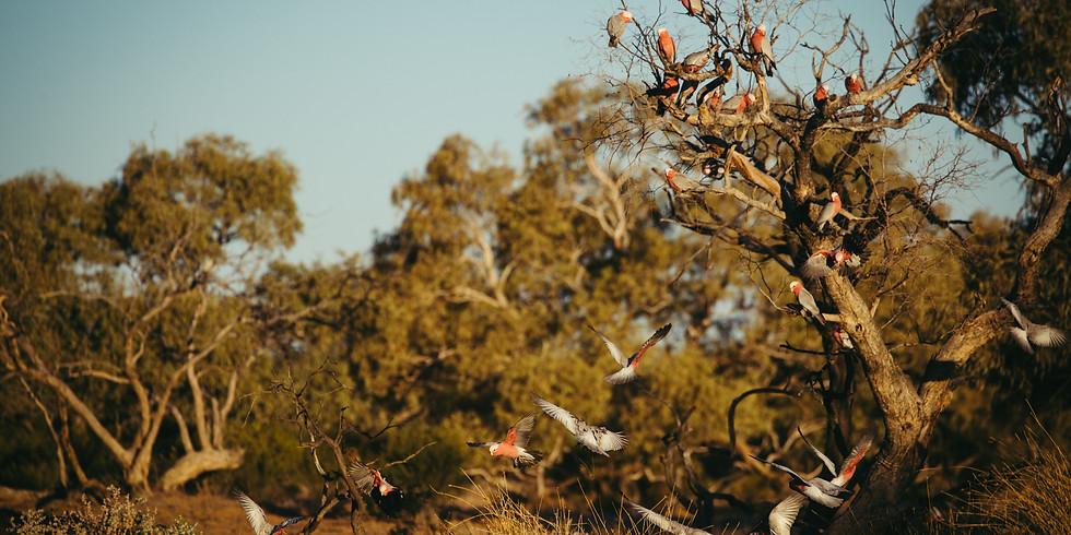 2020 - Dalhousie Springs - Witjira National Park S.A