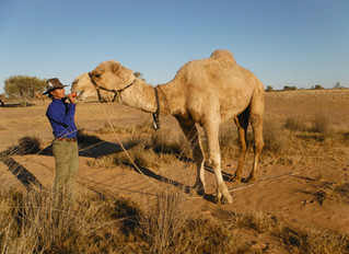Signature Expedition with ADE, 18 pack camels & 8 staff. MIKIRI EXPEDITION /  MUNGA-THIRRI EXPED