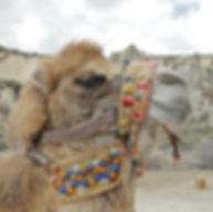camel-161460_1920.jpg