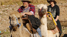 Camels, people and the media in  2015