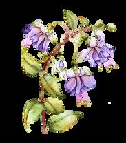 Blume lila.png