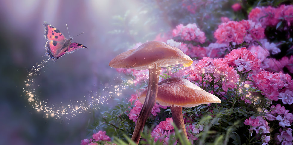 Fantasy Magical Mushrooms and Butterfly