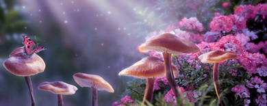 Magical fantasy mushrooms in enchanted f