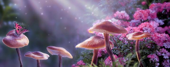 Magical fantasy mushrooms in enchanted f