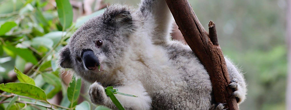 2020-04-01 09_39_35-(6) Australian Repti