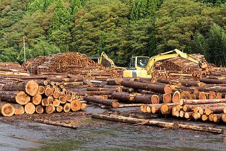 lumber-yard-with-stacked-lumber-9D6V8DU.jpg