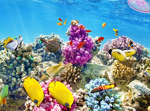 belize-reefs-underwater-MINING1016.jpg