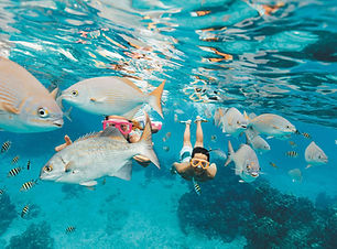 cozumel-mexico-reef-snorkeling-fish.jpg
