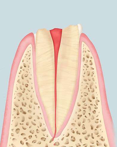 tooth-final-illustration-cristina-sala-r