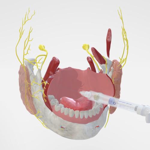 3D INTERACTIVE MODEL