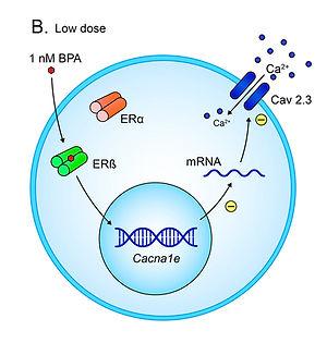beta cell scientific reports figure insu