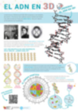 infographic, infográfico, DNA, ADN, flat design, poster, graphic design, genetics, genética, science, scientific illustration, scientific communication, medical illustration, UMH, Fecitelx, Instituto de Bioingeniería, Biotecnología, cristina sala, cris sala, sala ripoll, cristina