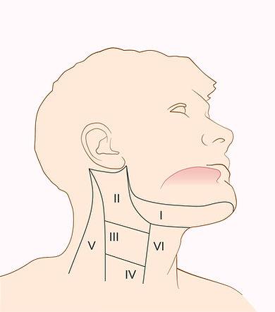 Sentinel-lymph-nodes-k-boeve-illustratio
