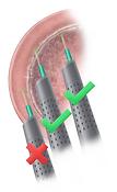 scientific-medical-illustrator-crisina-s