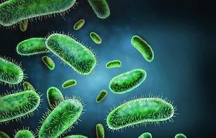 Bacteria-Scientific-Illustration-Work.pn