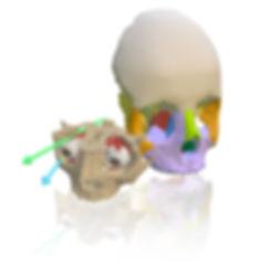 elearning, bodyparts3d, creative commons, 3D, model, interactive, anatomy, sketchfab, art, illustration, medicine, bones, skeleton, skull, eye, orbit, axis, muscles, nerves, eye movement, zygomatic, maxilla, oculomotor, oblique, zbrush, cristina sala, sala ripoll, cris sala