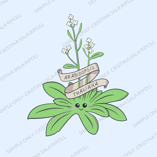 Cute Arabidopsis Thaliana Plant