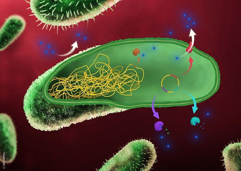 antimicrobial-resistance-mechanisms-illu
