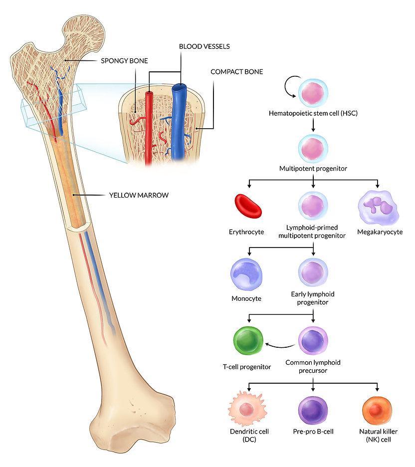 elearning-immunology-umcg-cristina-sala-