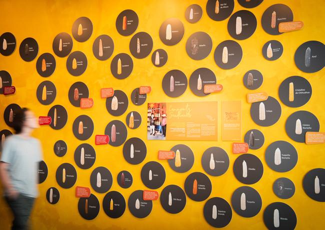 MilpaMesa Maize Wall