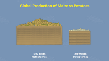 Global maize production