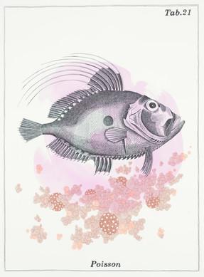 Alain ESCHENLAUER - poisson.jpg