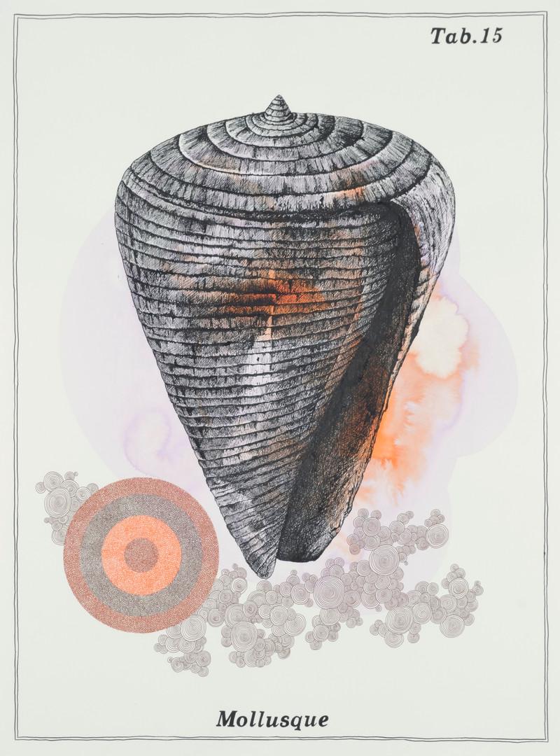 Alain ESCHENLAUER - mollusque.jpg
