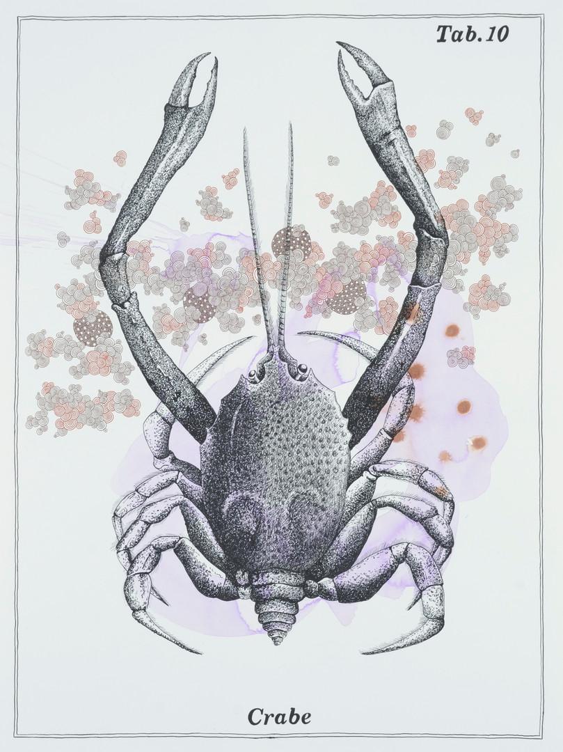 Alain ESCHENLAUER - crabe.jpg